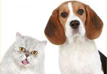 云宠商店(Cloudpet)宠物链旗下养宠软件